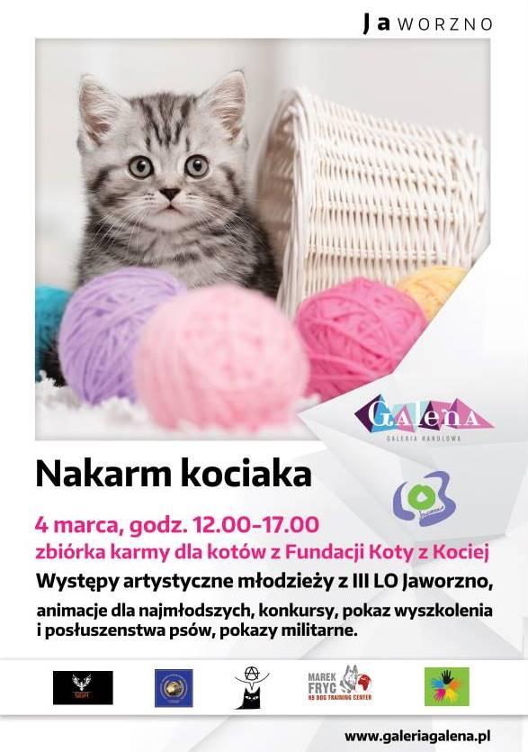 plakat-koty-1